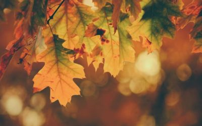 5 Tips For A Healthy Autumn from Katie Bell